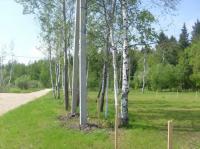 Земельный участок. Электричество, хороший подъезд, граница леса.