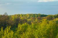 Участок у леса и реки 6 соток!