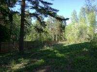 Участки у соснового леса
