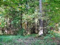 Лесной участок 56 сот в Лобня, мкр. Луговая, Дмитровское шоссе